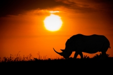 2013 Safari and South African Cruise on Silversea