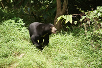 Sun Bears Orion Expedition Cruises